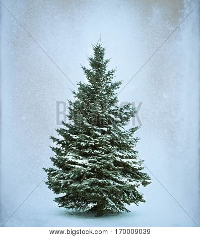 Christmas Tree in snow  Isolated over White background