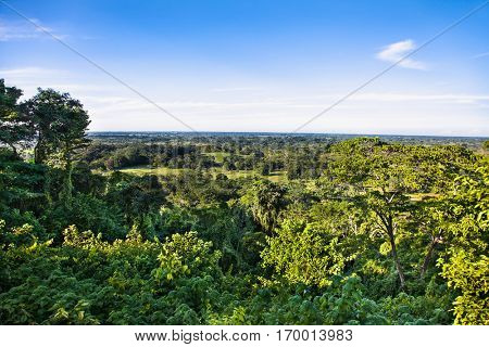 Panoramic view at mexican jungle from  Palenque Temple, Chiapas region, Mexico.