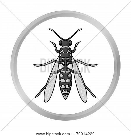 Wasp icon in monochrome design isolated on white background. Insects symbol stock vector illustration.