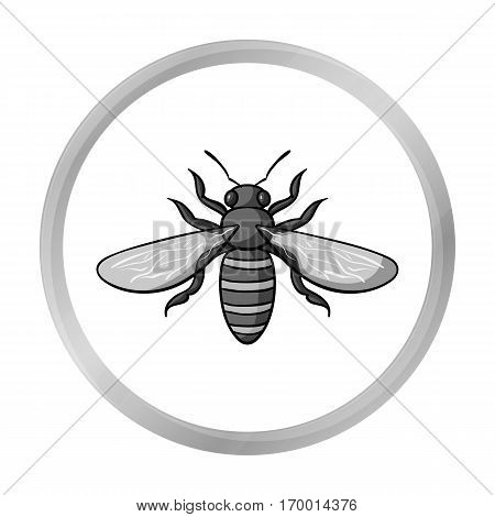 Bee icon in monochrome design isolated on white background. Insects symbol stock vector illustration.