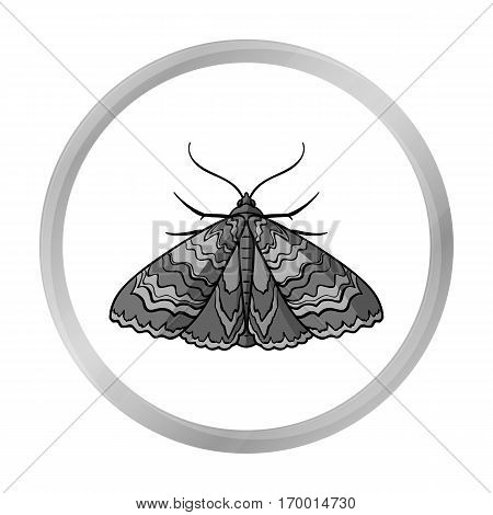 Moth icon in monochrome design isolated on white background. Insects symbol stock vector illustration.