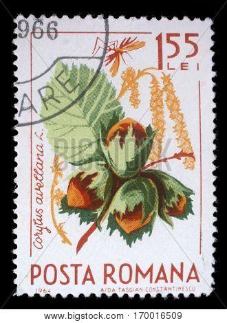 ZAGREB, CROATIA - JULY 18: a stamp printed in the Romania shows Hazelnuts, Corylus Avelana, Common Hazel, Natural Fruit, circa 1964, on July 18, 2012, Zagreb, Croatia