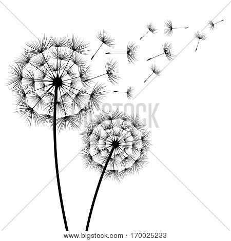 Two stylized black dandelions silhouette with flying fluff on white background. Floral stylish modern wallpaper with summer or spring flowers. Beautiful trendy nature backdrop. Vector illustration