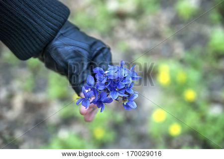 fragrant violets and the medical flowers bouquet