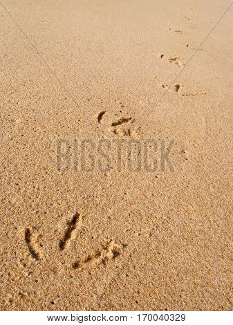 Close up macro of a seagull footprints track on the wet beach sand with perspective