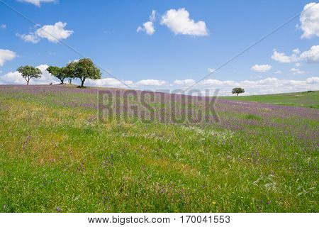 Alentejo landscape during spring with the fields covered with flowers. Alto Alentejo, Portugal.