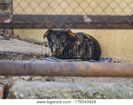 The sad lonely dog behind a fence