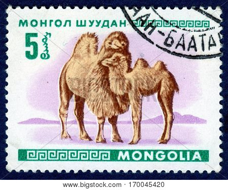 MONGOLIA - CIRCA 1968: Postage stamp printed in Mongolia shows image of a little camel, from the series