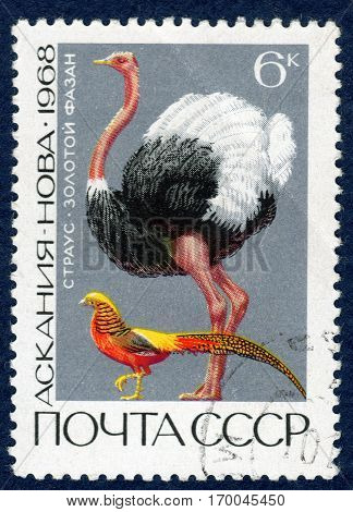 USSR - CIRCA 1968: Postage stamp printed in USSR with a picture of Ostrich (lat. Struthio camelus) and Golden pheasant (lat. Chrysolophus pictus), of the series