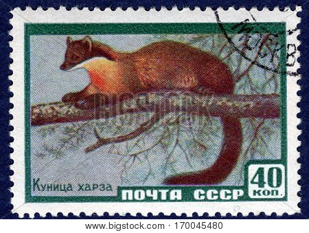 USSR - CIRCA 1959: Postage stamp printed by USSR with a picture of the Hartha marten from the series