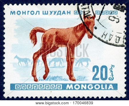 MONGOLIA - CIRCA 1968: Postage stamp printed in Mongolia shows image of a little foal, from the series