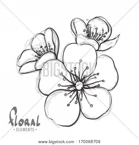 Sakura flowers on a white background with place for your inscription