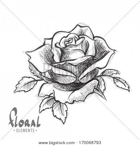 Lush rose in black and white