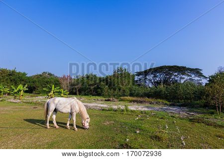 White Horses In The Field