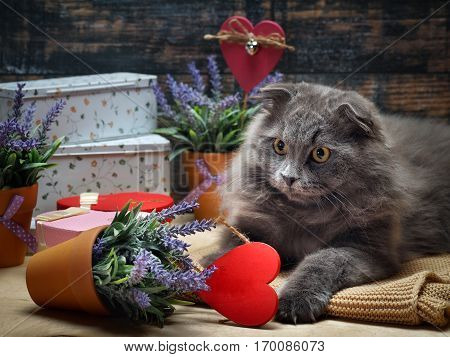 Cat bully dropped the flower with the plant. Gifts boxes red heart