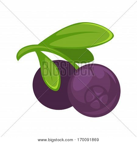 Purple blueberry realistic vector illustration. Healthy berries isolated on white background. Organic edible round berry in cartoon style design. Ripe juicy blueberries with green leaves.