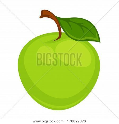 Green apple with leaf isolated on white background. Fresh sweet, pomaceous organic fruit drawing. Botanical realistic look vector illustration. Healthy dieting ingredient. Tasty fleshy ripe fruit