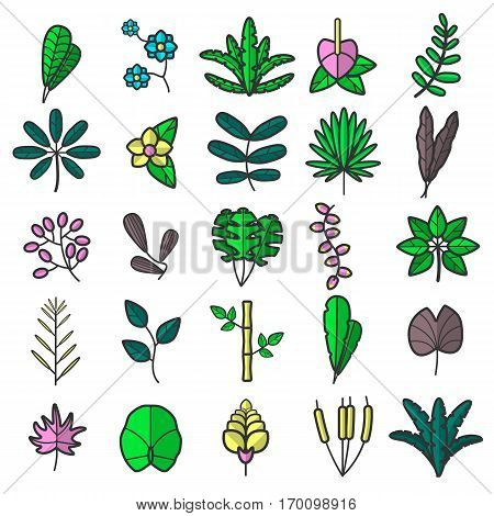 Tropical and usual plants and flowers colourful collection on white. Vector poster of green fern leaves, violet maple, water reed mace and other plants badges that grow on land and on water.