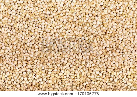 A background of white Chenopodium quinoa seeds, a superfood high in protein and fibre.