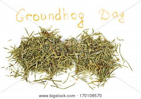 Groundhog Day isolated on white. Studio Photo