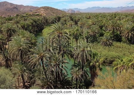 View of huge palm oasis on Rio Santa Rosalia, Mulege, Baja California Sur, Mexico with mountains in distance