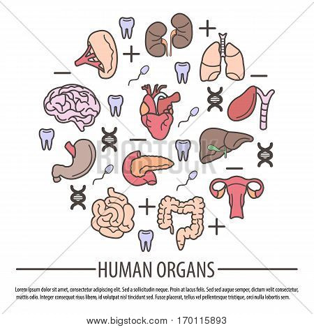 Human organs with DNA parts, Rh factors and teeth signs above text information. Vector collection of vital working things that are inside each person body. Anatomy visual structure of human body