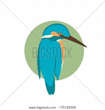 kingfisher bird vector illustration style Flat side