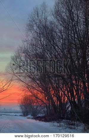 sunset with tree shadow and snow, red sky