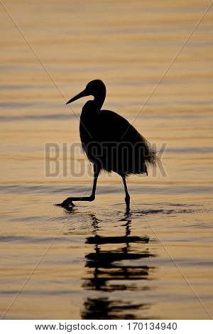 shadow of an egret in the sunset Sine Saloum delta Delta