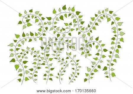 Vector Floral Background With Green Clambering Plants