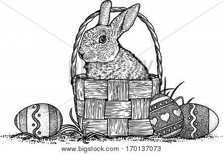 Rabbit, bunny, basket, eggs, easter illustration, drawing, engraving, line art