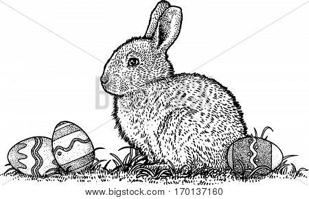 Rabbit with easter eggs illustration, drawing, engraving, line art