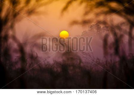 Warm Sunset on african savanna through the foliage