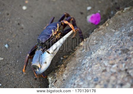 Fiddler crab on the sand viewed from above senegal