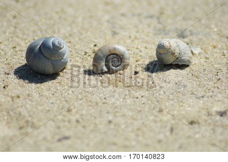 Three cockleshells lie on summer hot sand