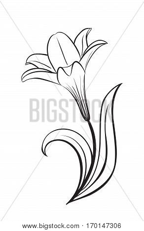 Abstract Flower Lily vector silhouette icon. Creative Luxury Fashion logotype concept icon. lily logo