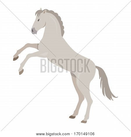 Rearing gray horse with hind legs vector. Flat design. Domestic animal. Country inhabitants concept. For farming, animal husbandry, horse sport illustrating. Agricultural species. Isolated on white