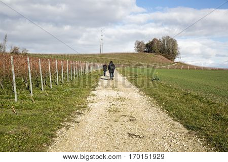 People wandering in an autumn swiss countryside with wineyards
