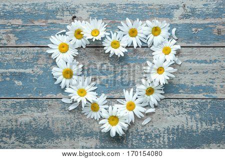 Daisy flowers in heart shape on blue painted wooden board