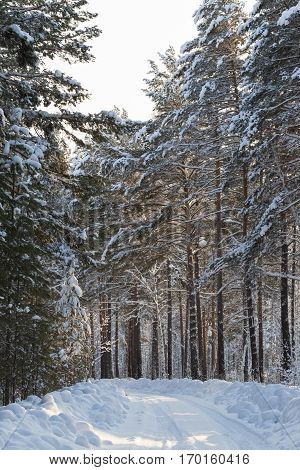 Snow-covered road in the forest. Somewhere in Siberia. Russia
