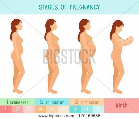 Pregnant beautiful woman vector infographics. Pregnancy by trimester stages vector illustration. Female with fetus in belly