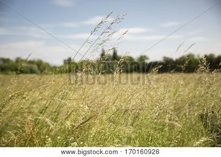 view over a field with wild grass