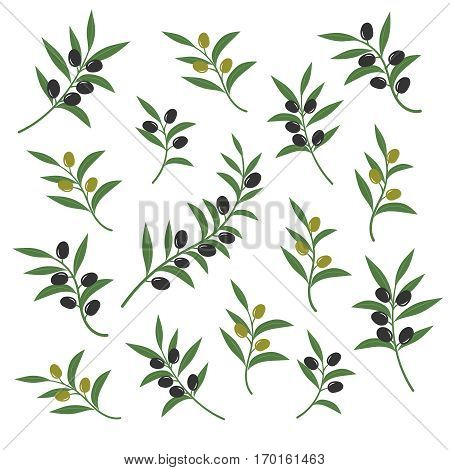 Olive branch set vector illustration. Italian sicilian or greek oil green branches symbols isolated on white background. Collection of branch olive with leaf