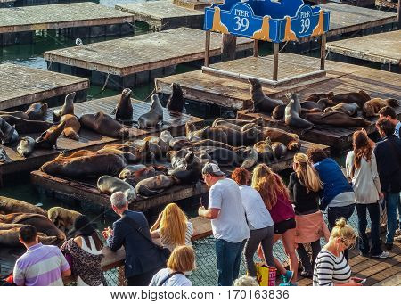 San Francisco, USA ,October ,9 ,2015: Tourists walk on pier 39 and  look sea lions, in Fisherman's Wharf San Francisco,  America.