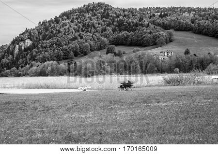 landscape of the Brenet Lake and Jura mountain with couple of old man and woman sitting on a bench and feeding a swan Le Pont Switzerland