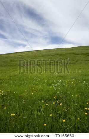 landscape of Jura mountain with blooming green meadow Switzerland