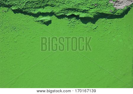 green grunge cement background. greenery, color of  year 2017.