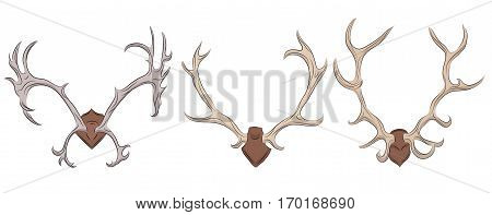 Set of different deer antlers. Vector element for your design