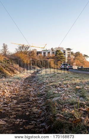 Morning View of frozen leaves on UK Motorway.