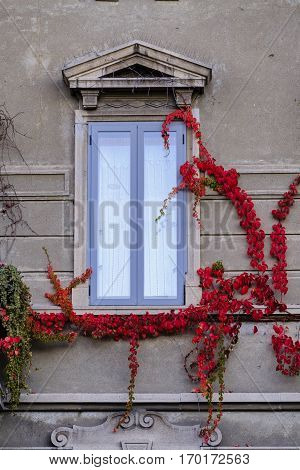 Milan (Lombardy Italy): old typical window with plant at Citylife